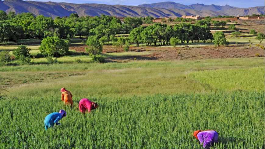 Productive desert agriculture in Morocco