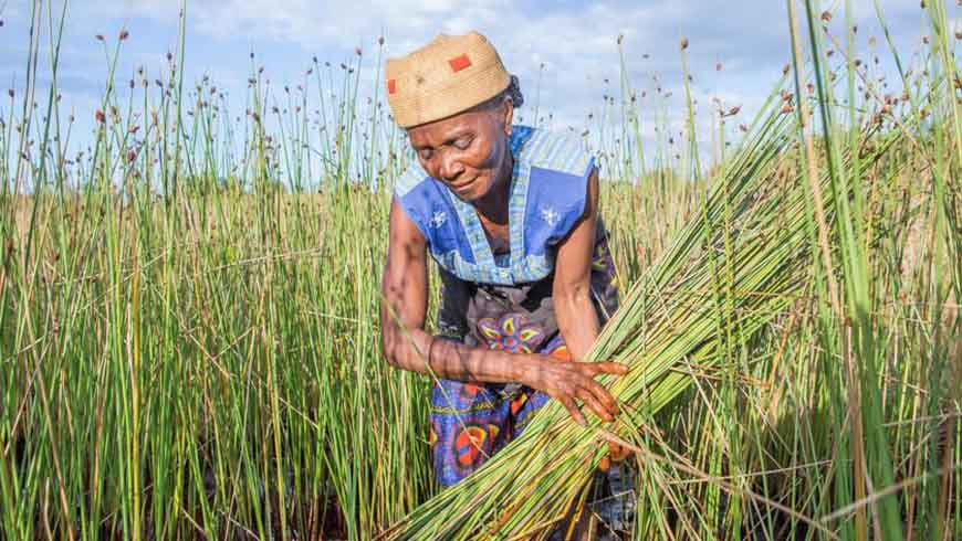 A changing climate is challenging generations-old patterns of production in Madagascar, pushing communities to find new ways to survive and thrive. Photo: UN Environment / Lisa Murray