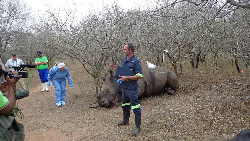 Group of people having a discussion in the forest near a poached rhino's corpse