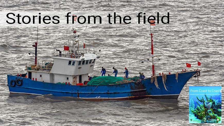 Chinese commercial fishing boat surrounded by seagulls