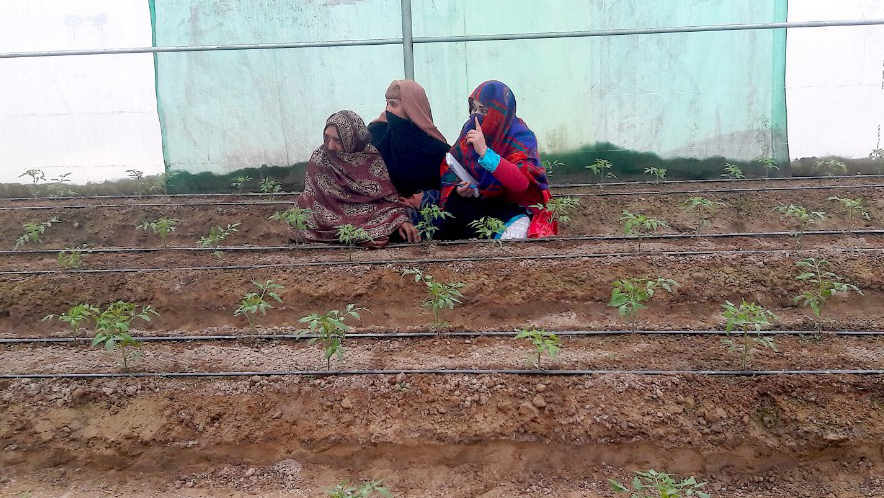 Afghan women in a greenhouse