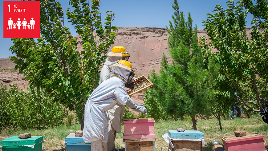 Beekepers check the hives in Afghanistan