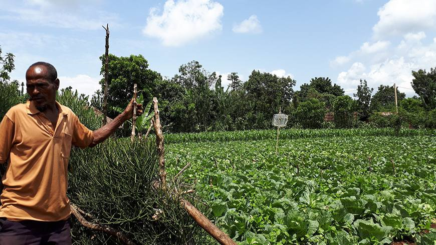 A farmer in Ethiopia stands next to one of his fields