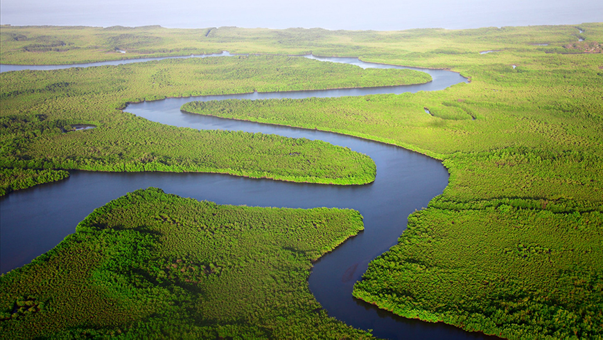 Winding river through virgin forests in The Gambia