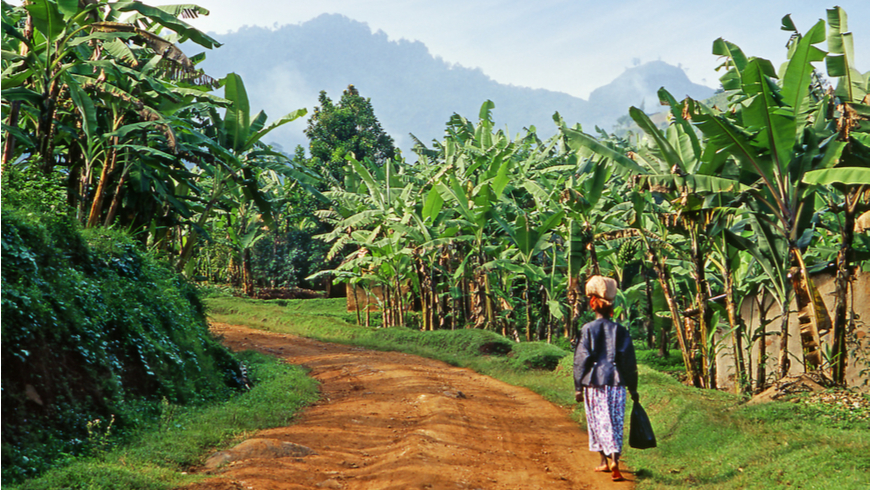 Woman walks to market through banana field in Uganda