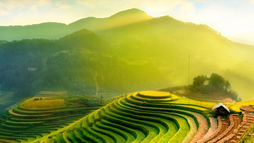 Rice fields on terraces of Mu Cang Chai, YenBai, Vietnam.