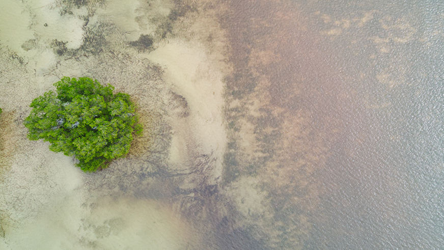 Isolated vegetation surrounded by sand and water