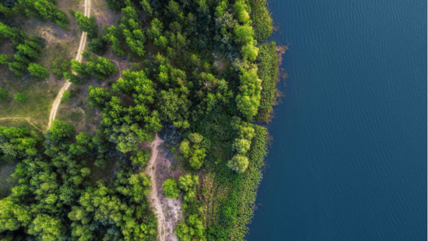 Drone shot of forest meeting water