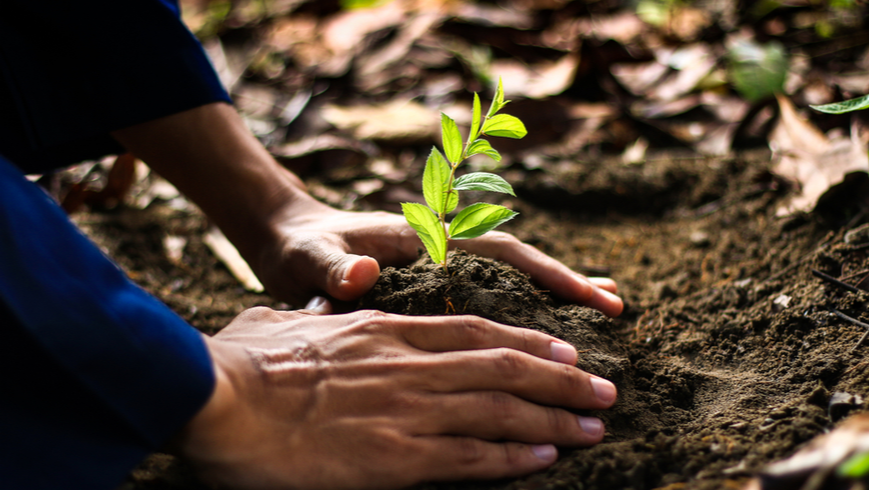 Person planting seed tree in the ground