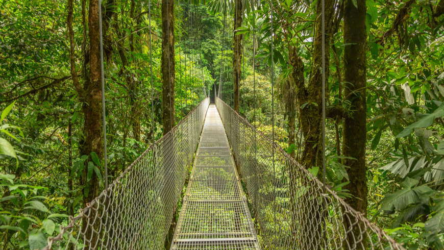 Suspended walking bridge in Costa Rica rainforest