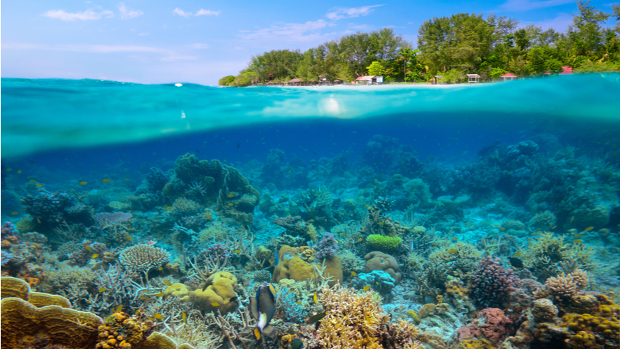Under and above the water in Indonesia