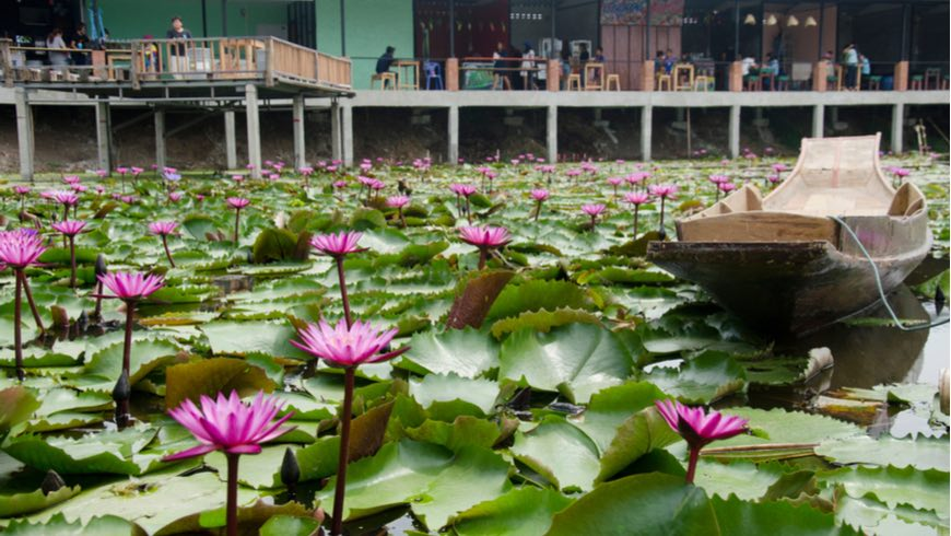 A canal in Thailand covered with water lilies.