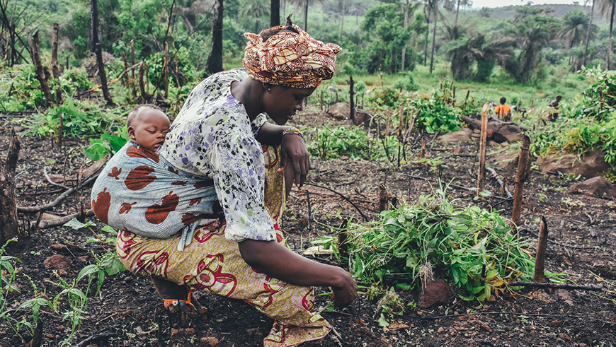 Woman with baby farming cassava in Sierra Leone