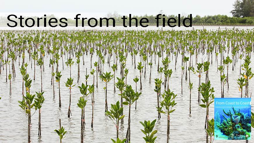 Baby mangrove forest in Thailand