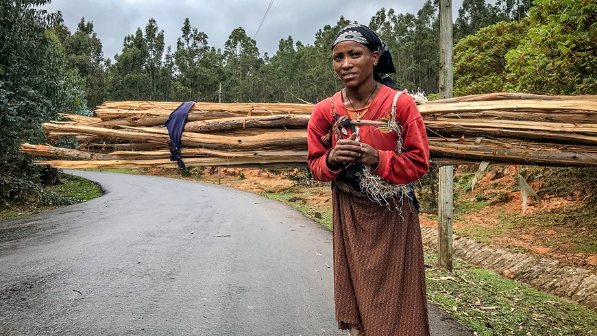 Ethiopian woman with large bundle of firewood strapped to her back