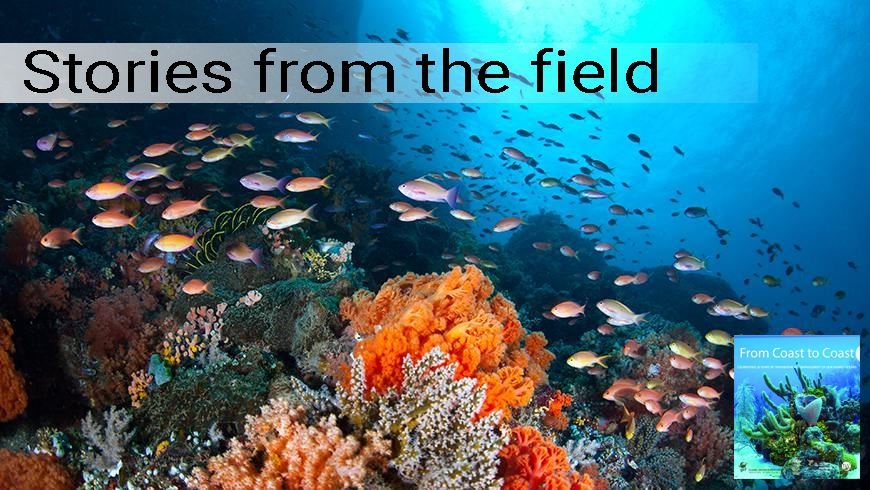 Underwater shot of coral reef near North Sulawesi, Indonesia