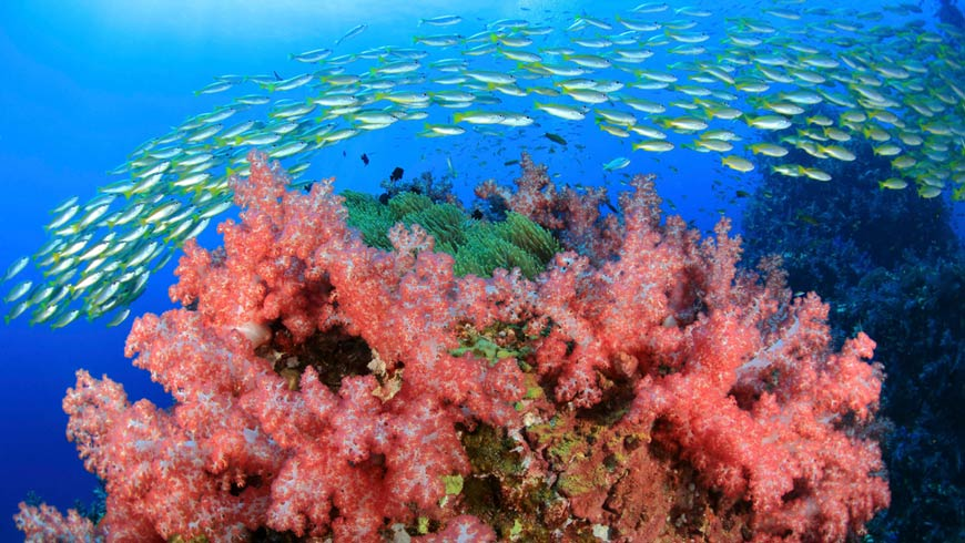 Recognizing The Critical Need For Global Action To Ensure The Sustainability Of Our Oceans The Gef Has Provided Tremendous Support To Ocean Governance