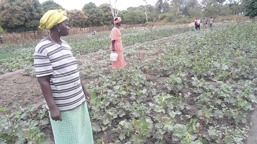 Guinea sustainable agriculture example