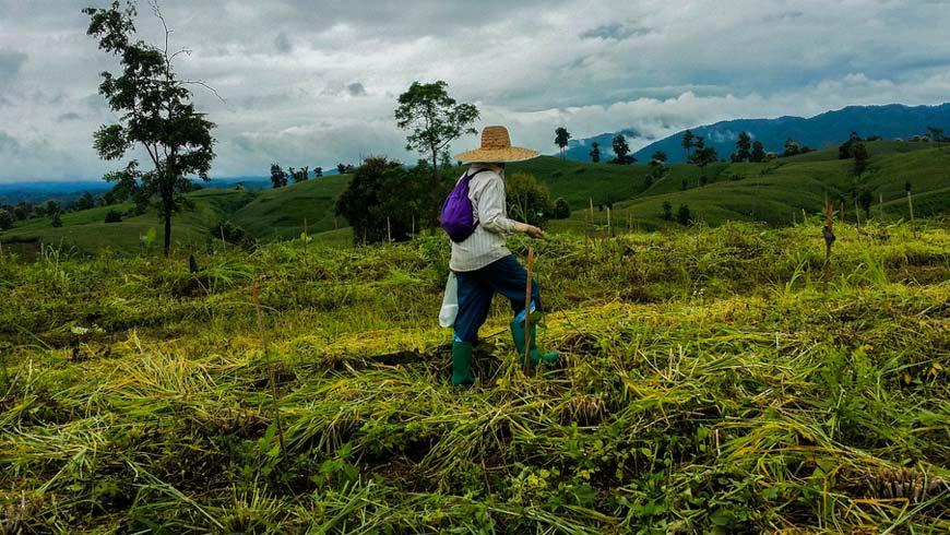 Forest restoration in Thailand