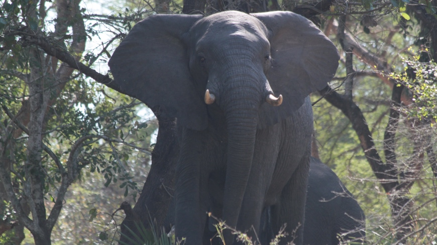 Elephant in Gorongosa National Park. Photo: Sarah Wyatt/GEF.