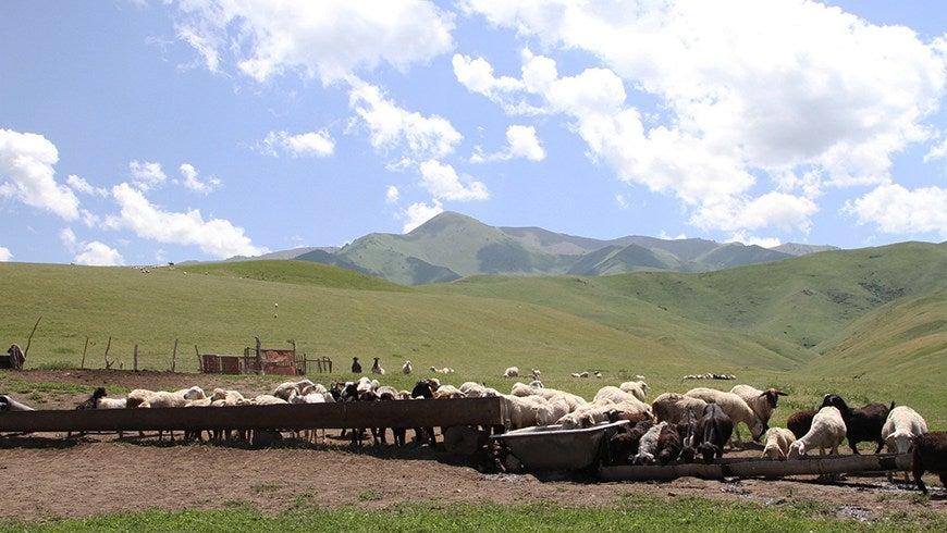 A GEF Small Grants Programme Kazakhstan