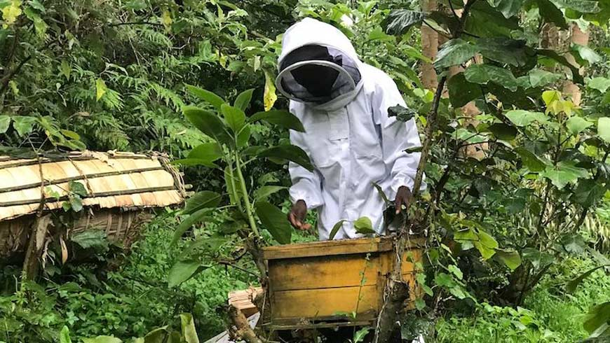 Beekeeper in Rwanda forest working on beehive