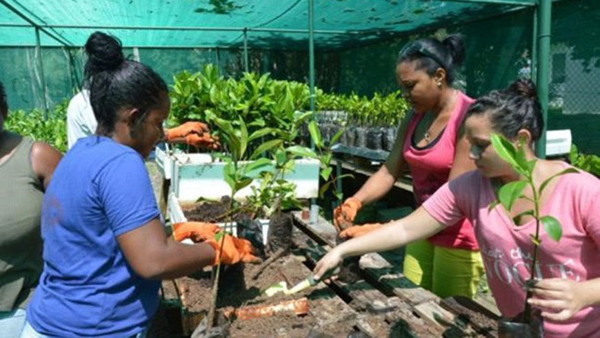 Workers participate in training on the preparation of young trees in a nursery setting