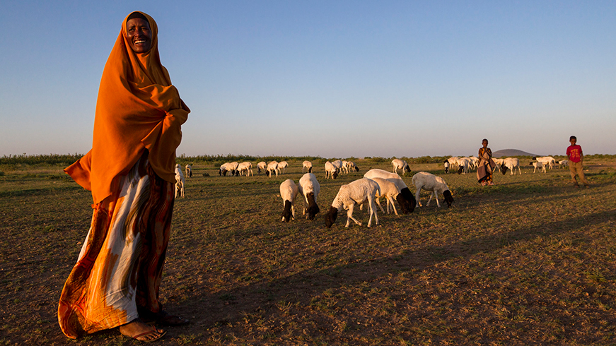 Ethiopian woman watching over sheep flock at sunset
