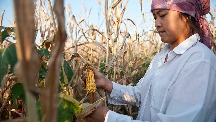 Young Kyrgyz farmer picking corn