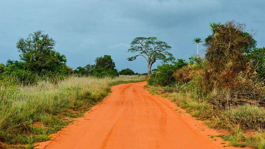 Dirt road in Quicama National Park in Angola