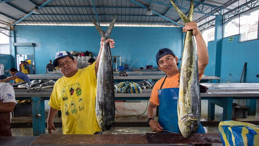Mahi-mahi is important for the Ecuadoran economy.