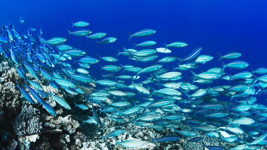 School of fish in the ocean