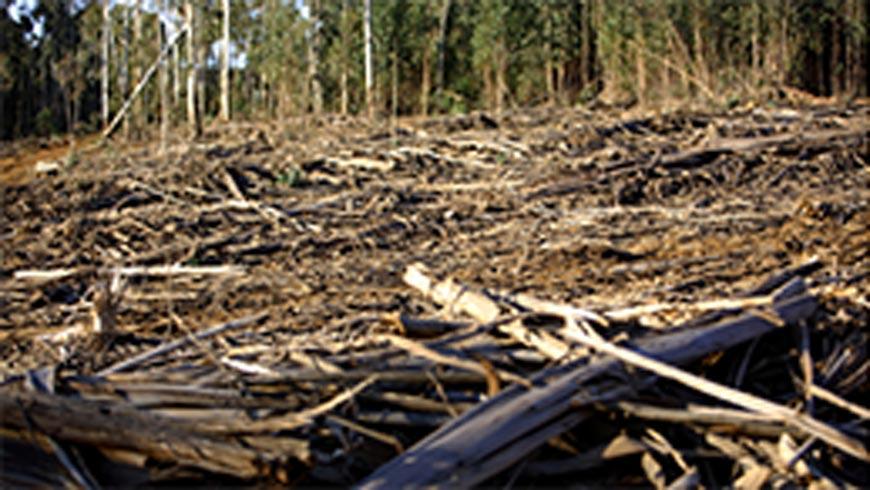 Deforestation in Africa.