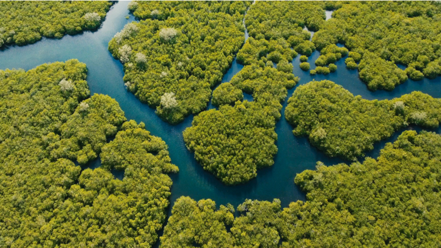 Aerial view of mangrove forest and river in the Philippines