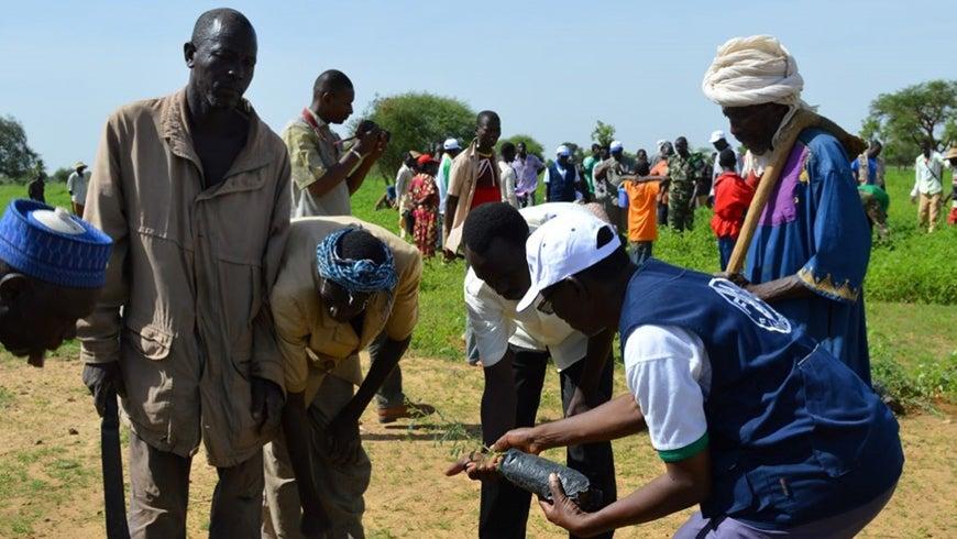 Communities planting seedlings in Great Green Wall site in Burkina Faso