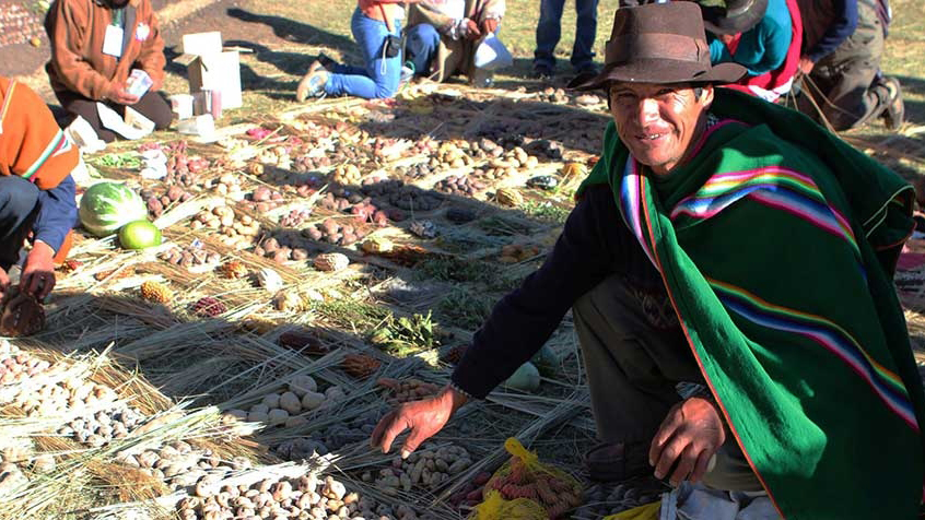 Peruvian man crouching next to harvest