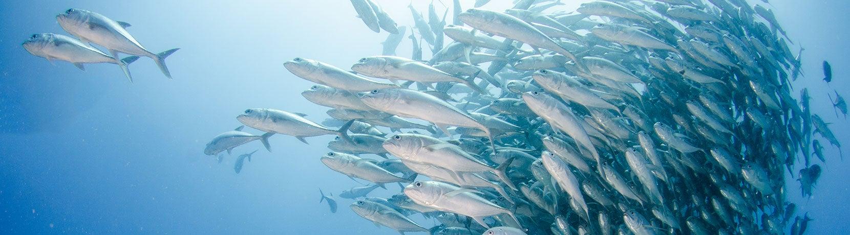 Large Marine Ecosystem