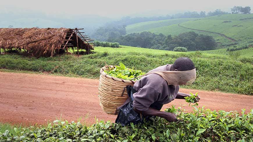 Ugandian farmer