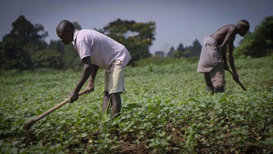 Men farming in Africa.