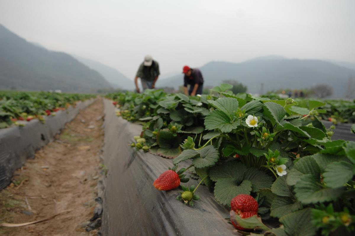 The Silent Attack of Persistent Organic Pesticides | Global