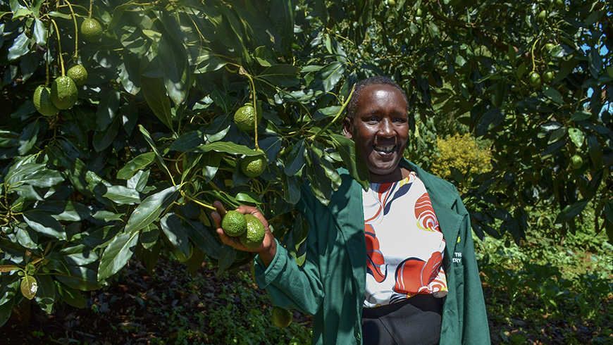 A woman in her avocado garden
