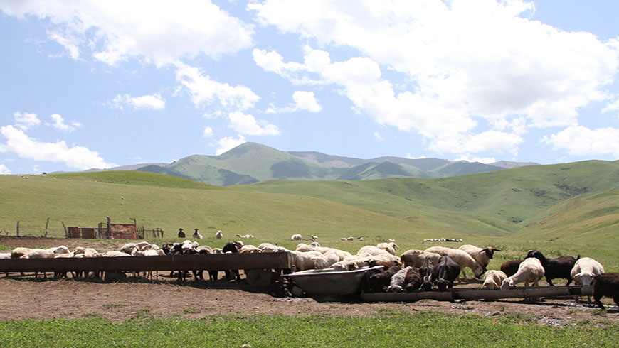Pasture and cattle in the mountains near Almaty, Kazakhstan. The Dryland Sustainable Landscapes (DSL) Program will focus on three dryland regions, including the temperate grasslands, savannas, and shrublands of Central Asia. Photo: Patrizia Cocca/GEF