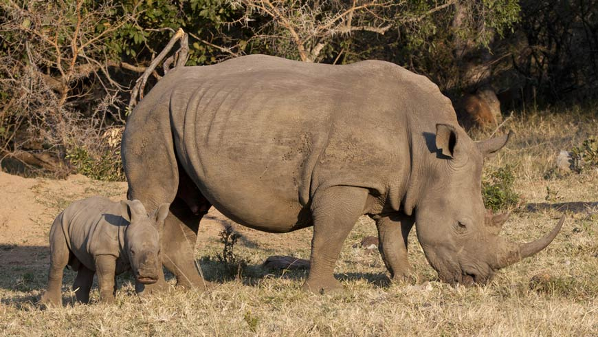 "In December 2016, Malawi's National Assembly passed amendments to its Wildlife and National Parks Act that stiffened criminal penalties for poachers and traffickers of ""listed species"", namely rhinos and elephants."
