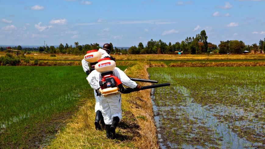 Reducing malaria without DDT   Global Environment Facility