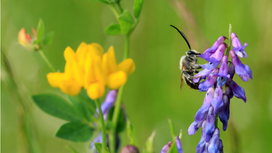 Bee on a flower. Photo: Eileen Kumpf/Shutterstock.