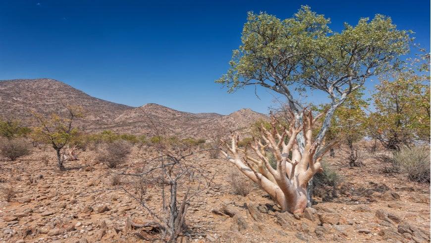 Landscape of Iona National Park, Angola