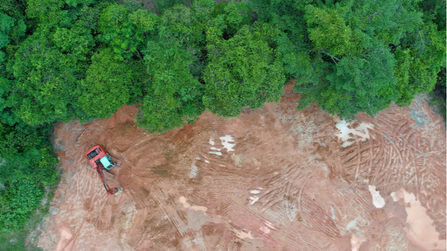 Deforestation in a Southeast Asia jungle