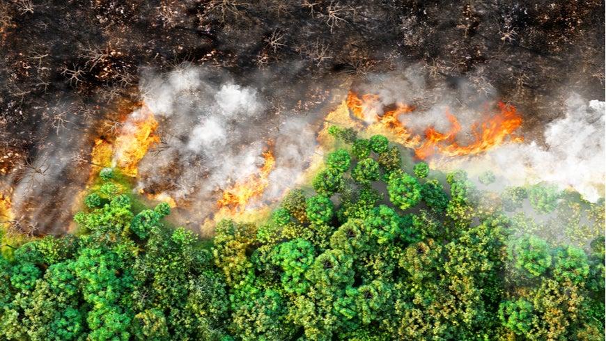 3d illustration of a half-burned forest