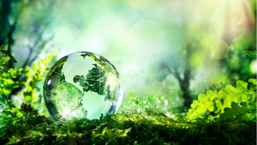 Glass globe in the forest