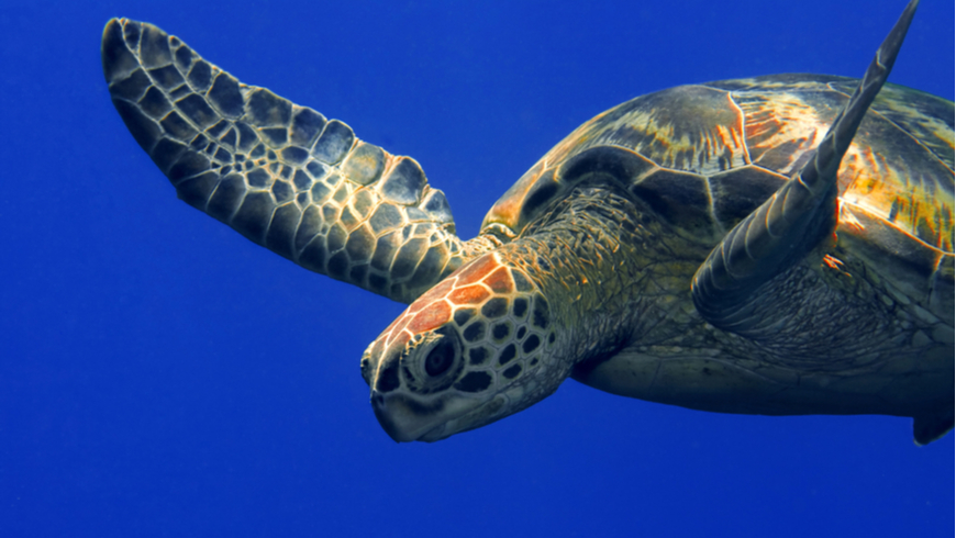 Protecting endangered sea turtles in Malaysia | Global ...